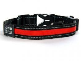 Cesar Millan Collier de chien LED solaire USB Taille L