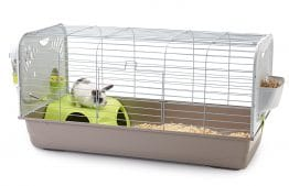 cage Caesar